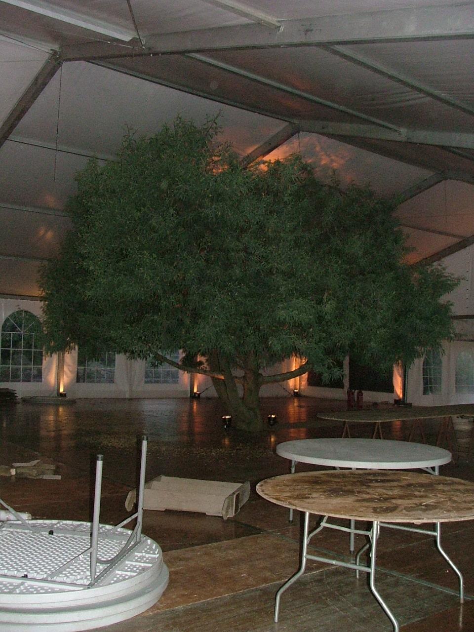 stand-arbre2