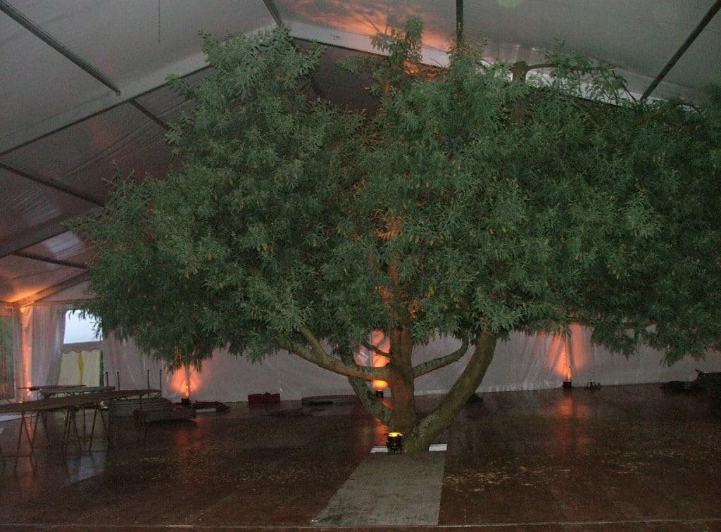 stand-arbre
